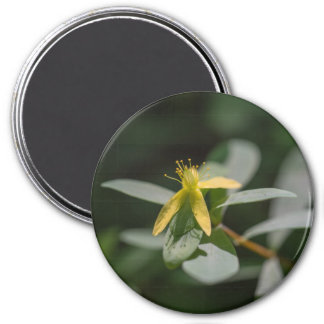 Reclining St. Andrews Cross Wildflower Magnet