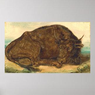 Recumbent Bull 1842 Posters