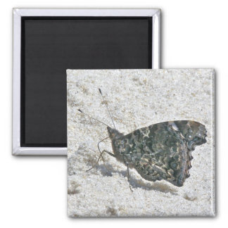 Red Admiral Butterfly on Beach Coordinating Items Square Magnet