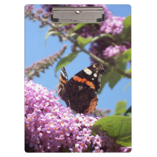 Red Admiral Butterfly on Buddleia Clipboard