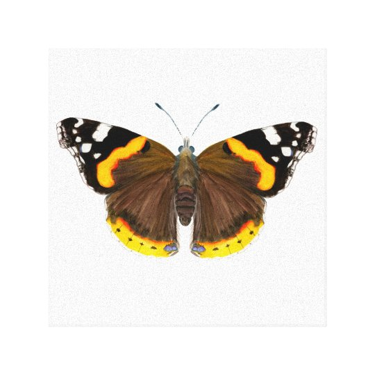 Red Admiral Butterfly Watercolour Painting Artwork Canvas Print