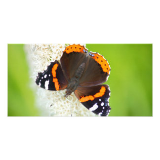 red admiral photo card template