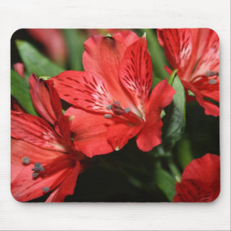 Red Alstroemeria Flower Mouse Pad