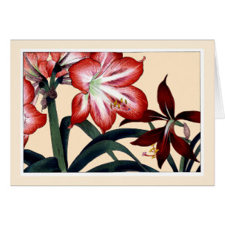 Red Amarylli, Botanicals Card - Customize Greeting