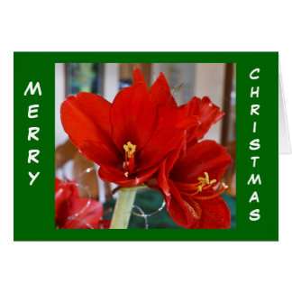 Red Amaryllis Card