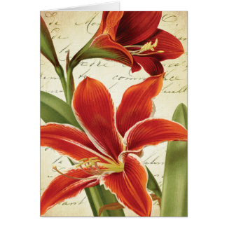 Red Amaryllis Christmas Flower Botanical Card