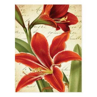 Red Amaryllis Christmas Flower Botanical Postcard