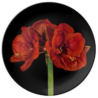 Red Amaryllis on Black Porcelain Plate