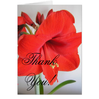 Red Amaryllis Thank You Card
