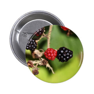 Red and black blackberry fruits. 6 cm round badge