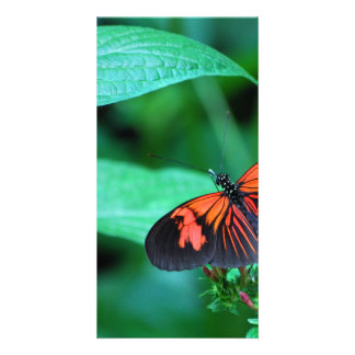 Red And Black Butterfly Photo Greeting Card