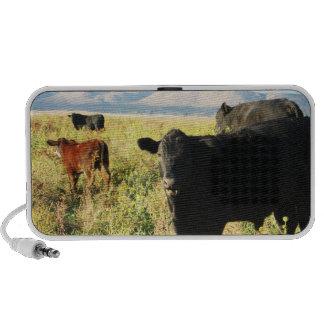 Red and Black Cow Calf Herd - Calves PC Speakers