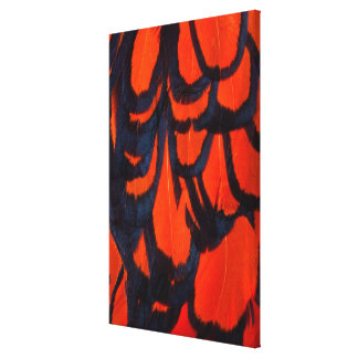 Red And Black Feather Abstract Canvas Print
