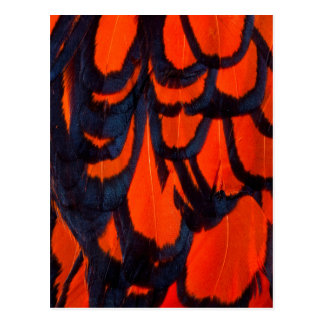 Red And Black Feather Abstract Postcard