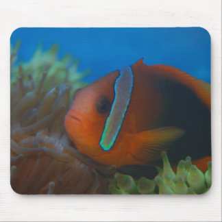 Red and Black Tropical Fish Mouse Pad
