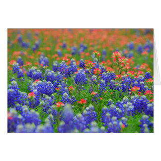 Red and Blue Wildflower Card