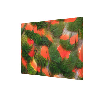 Red And Green Feather Pattern Canvas Print