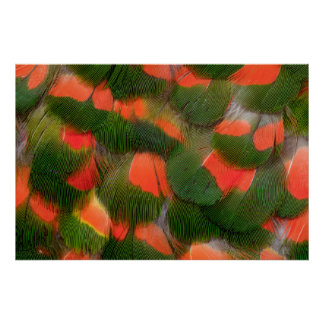 Red And Green Feather Pattern Poster