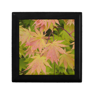 Red and green japanese maple leaves trinket box