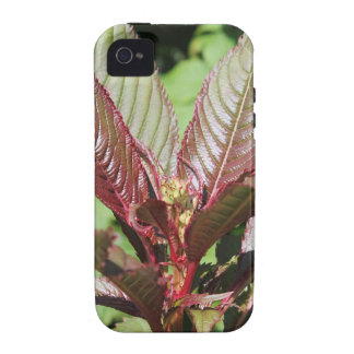 Red and Green Leafy Plant. iPhone 4 Case