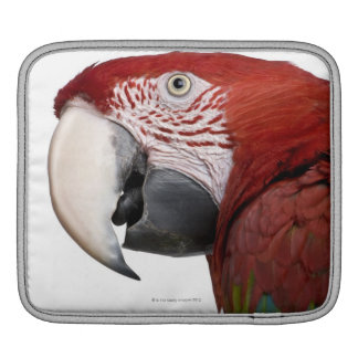 Red-and-green Macaw - Ara chloropterus iPad Sleeve
