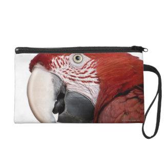 Red-and-green Macaw - Ara chloropterus Wristlet