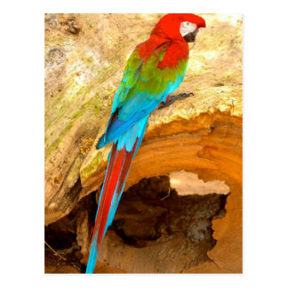 Red and Green Macaw, Trinidad Postcard