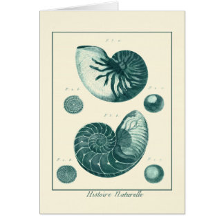 Red and Green Seashell Art Card