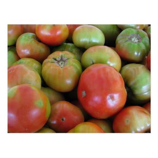 Red and Green Tomatoes Postcards