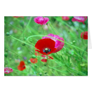 Red and Pink Poppies Greeting Card