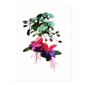 Red and Purple Fuschia Postcard