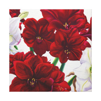 Red and White Amaryllis 2008 Canvas Print
