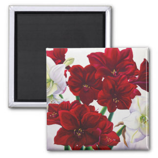 Red and White Amaryllis 2008 Square Magnet