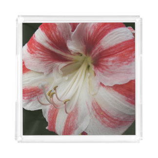Red and White Amaryllis Floral Acrylic Tray