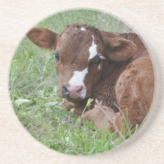 Red and white calf drink coaster