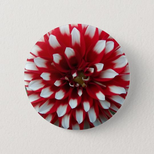 Red and White Dahlia Floral 6 Cm Round Badge