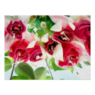 Red and White Fuschsias Poster