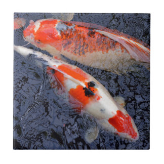 Koi ceramic tiles for Mini carpe koi