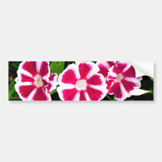 Red and White Morning Glories Bumper Stickers