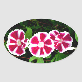 Red and White Morning Glories Oval Sticker