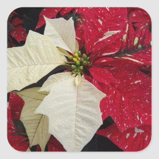 Red and White Poinsettia Holiday Square Sticker