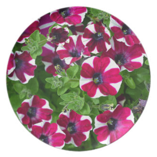 Red and white striped petunias plate