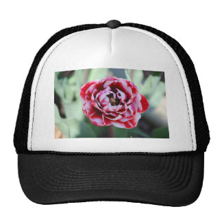 red and white tulip cap