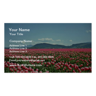 Red And White Tulip Field flowers Double-Sided Standard Business Cards (Pack Of 100)