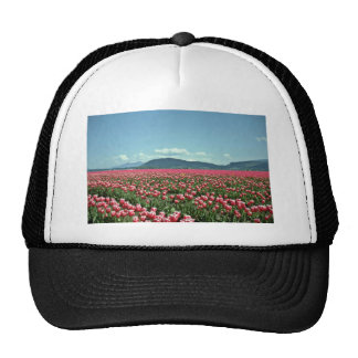 Red And White Tulip Field flowers Cap