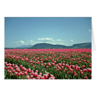 Red And White Tulip Field flowers Greeting Card