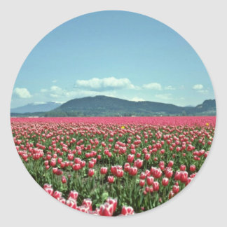 Red And White Tulip Field flowers Round Sticker