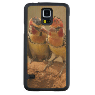 Red and Yellow Barbet eating termites Carved Maple Galaxy S5 Case