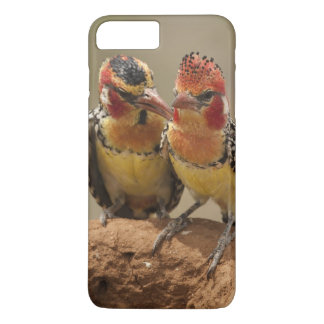 Red and Yellow Barbet eating termites iPhone 8 Plus/7 Plus Case