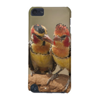 Red and Yellow Barbet eating termites iPod Touch 5G Case